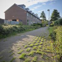Azaleasingel | Jan van der Spree