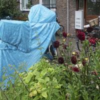 Thorbeckelaan | Coby van Wageningen