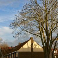 Herzogstraat | Elly Verkerk