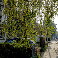 Zwarteweg | Richard Nijholt