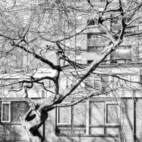 Tweede Blommensteinhof | Marga Schaap